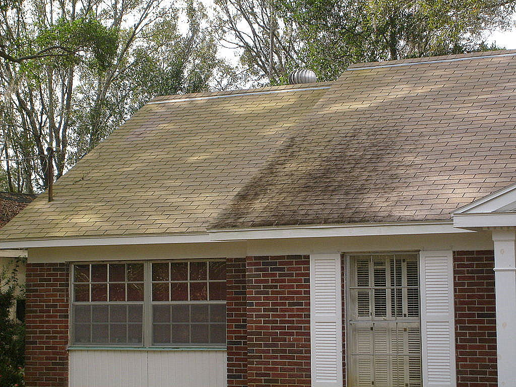 Green Mildew Cleaning Tampa Roof Shingles Roof Cleaning