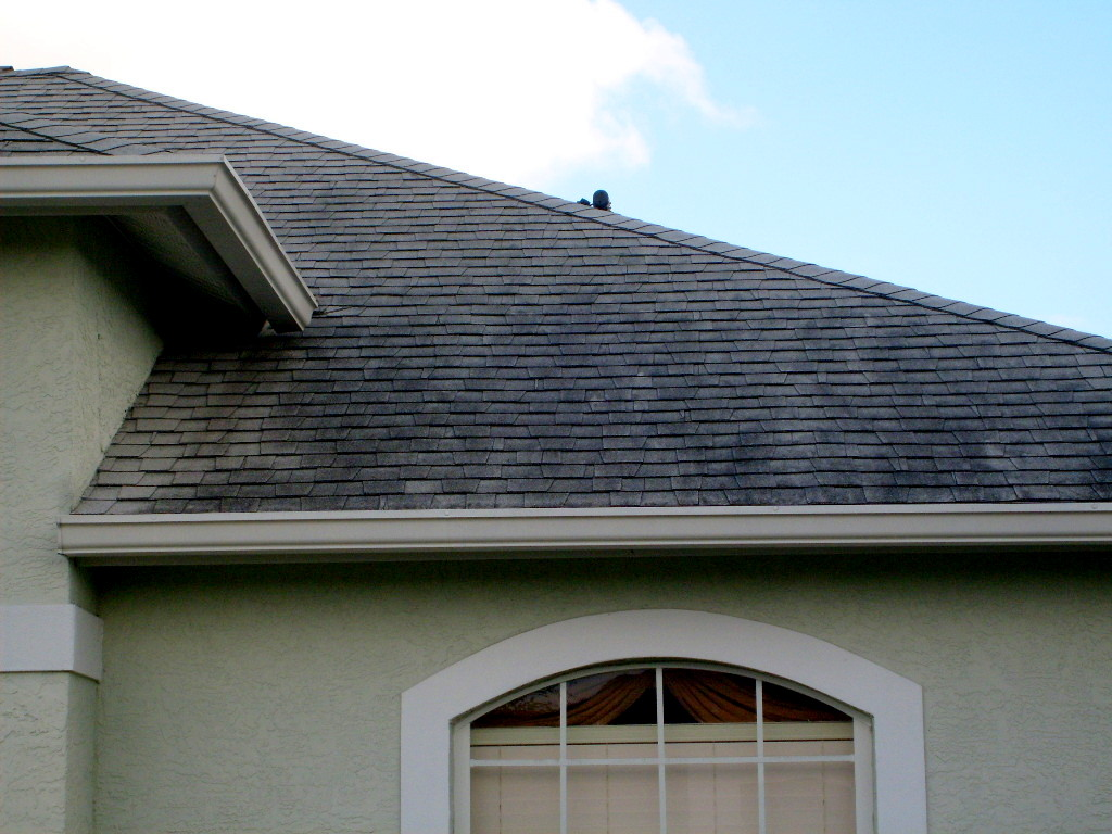 Shingle Roof Cleaning Tampa Florida Roof Cleaning Tampa